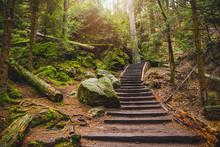 Wald Wandern Sonne