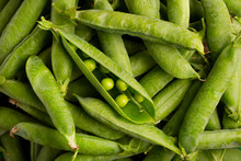 Closed And Open Pea Pods. Gree...