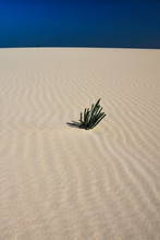 Single Green Plant In Sand Dun...