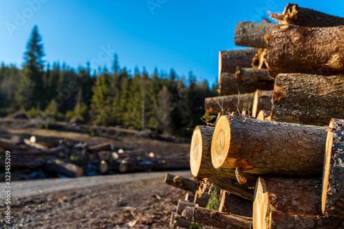 Photo Illegal cutted huge pine wood logs near roadside close up shot in Romania, copy space