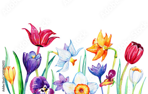 Composition with spring flowers on the bottom of the page. Hand drawn watercolor illustration of growing tulips, narcisusses, crocuses and pansies