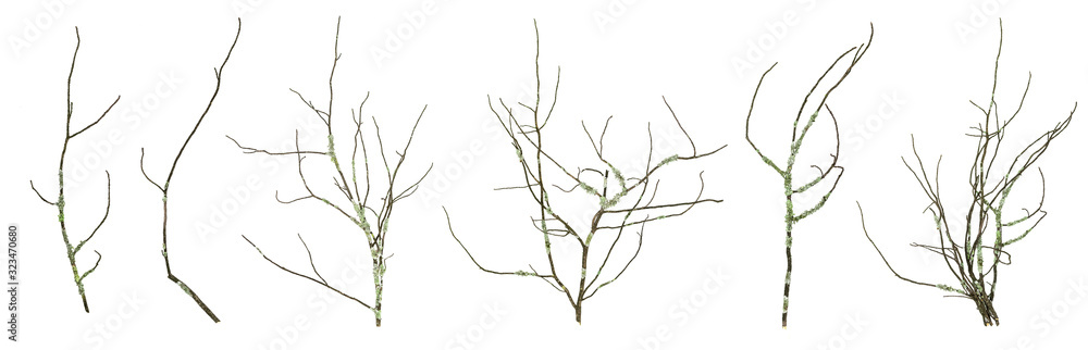 Fototapeta Dried mossy tree branches collection isolated on the white background.