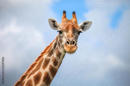 Photo Giraffe