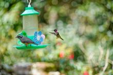 Hummingbird In Nature Wild Life
