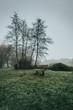 un banc au milieu d'un parc avec du brouillard