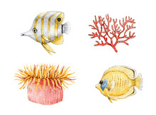 Coral Fish, Actinia And Coral ...