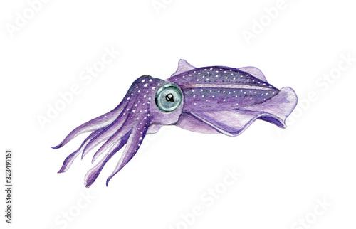 Fotografía Sea cuttlefish watercolor illustration