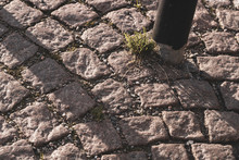 A Growing Plant Through The Ground Next To An Iron Pillar; Iron Pole On Stone Sidewalk