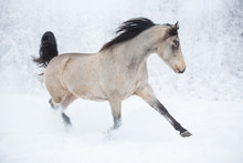 Beautiful Horse In The Winter ...
