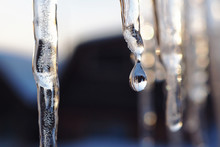 Icicles And A Drop Of Meltwate...