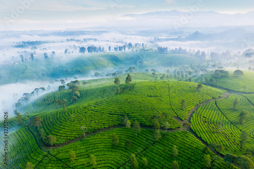 Aerial view of highland with green tea plantation