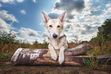 Calm Mongrel Dog Lying On Log ...