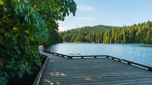 Boardwalk At Sasamat Lake Park...