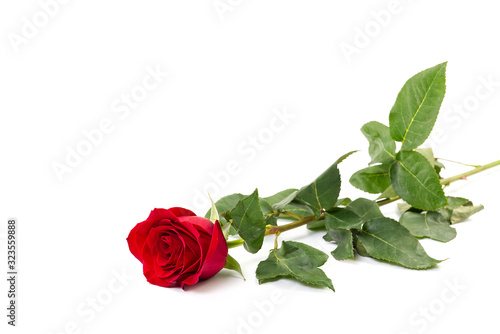 Beautiful single red rose flower isolated on white background. Red rose is a wonderful flower to express your feelings on International Women's Day, Mother's Day, Valentine's Day, and just to © Ilja