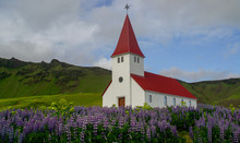 Church Surrounded By Blooming ...