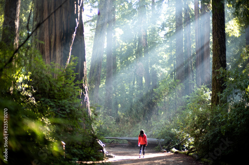 Fotografia Light Sunlight through redwood trees on a path in the redwood forest