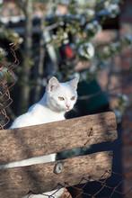 Cat Peeking From Barn Door