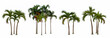 Leinwanddruck Bild - Palm tree isolated collection on white background