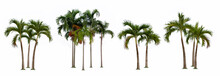 Palm Tree Isolated Collection On White Background