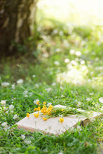 Open Book And Yellow Flower Bouquet On A Green Grass Against Beautiful Sunset Lights With Sun Ray, Selective Focus, Study, Relax Dreaming Concept, Copy Space