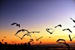 A group of seagulls flying in the colorful sky of the sea before dusk