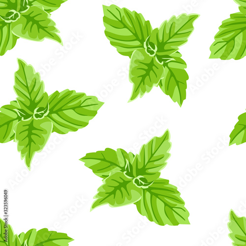 Fototapeta Green basil leaves seamless pattern. Vector illustration of aromatic culinary herbs isolated on a white background. Cartoon flat style. obraz