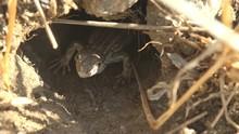 Gray Striped Lizard Peeps Out ...