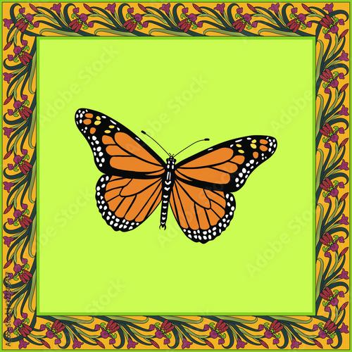 Vászonkép Danaus plexippus color illustration in vintage square frame