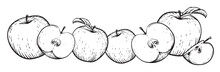 Apple Fruit Vector Set. Frame ...