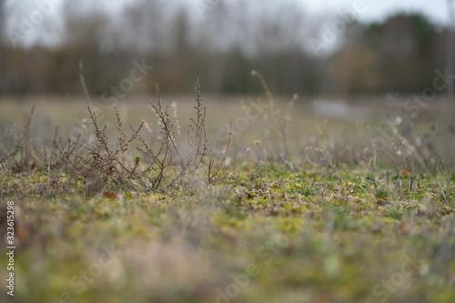 Obraz na plátne Wet Meadow in Winter