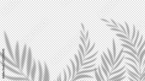 Obraz Shadow palm leaves. Overlay plant effect on transparent background. Summer minimalistic blurred nature vector banner. Palm shadow overlap, covers branch leaf illustration - fototapety do salonu