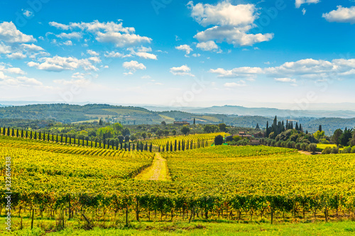Chianti vineyard panorama and cypresses row Canvas