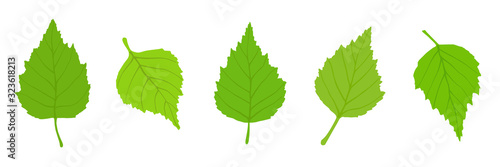 Birch leaves on a white background, spring background, vector illustration