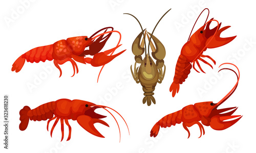 Lobsters with Thick Shell and Strong Chelate Limbs Vector Set Wallpaper Mural