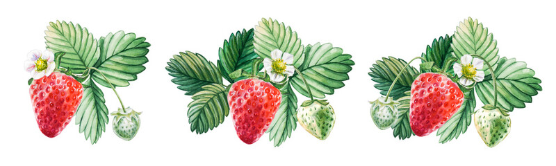 Panel Szklany Do kuchni Watercolor set of red juicy strawberries with leaves and flowes. Hand drawn food illustration. Fruit print. For postcards, packages, cards, logo. Summer sweet and bright fruits and berries.