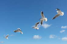 Beautiful Sea Gulls On A Backg...