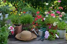 Flowerpots With Blooming Flowe...