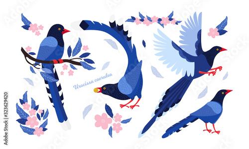 Taiwan azure magpie Wallpaper Mural