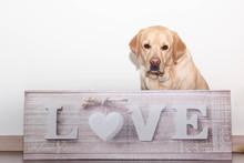 Un Perro Con Mucho Amor