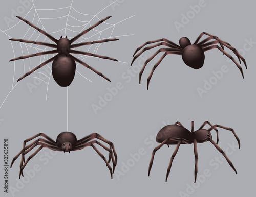 Spider realistic Canvas Print