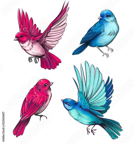 Photo Set of birds