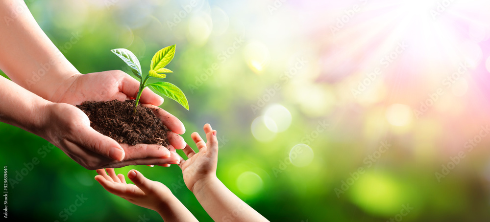 Fototapeta Old Woman Giving Young Plant To A Child - New Life To New Generation