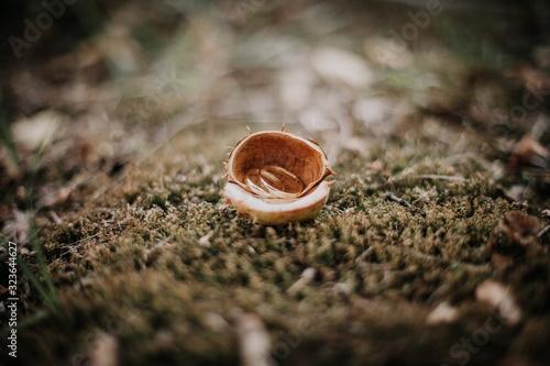Obrączki ślubne w łupinie kasztanowca