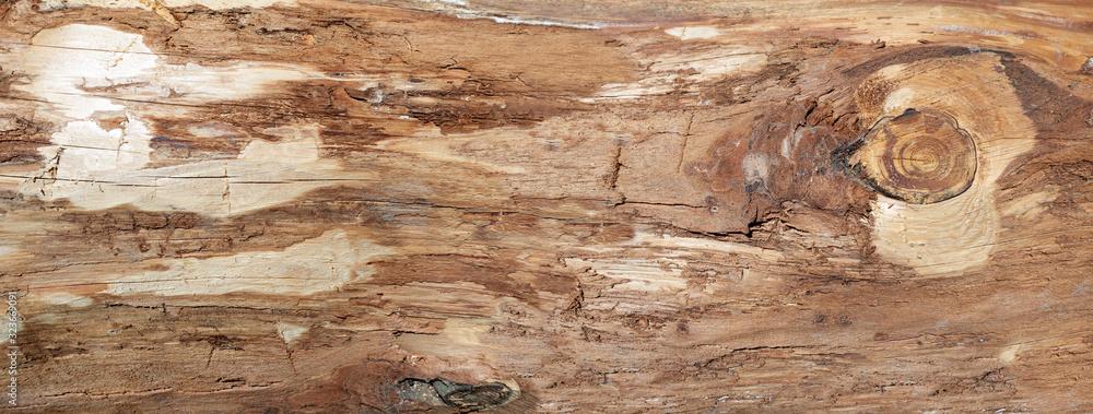 Fototapeta Grobe braune Holzstruktur der Oberfläche eines Baumstammes ohne Rinde in Nahaufnahme - Panorama