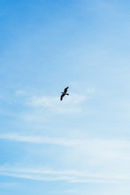 A Seagull Flying Free In The Blue Sky With A Few Clouds Above The Sea