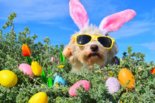 Funny Easter Bunny Dog