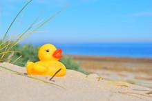 Yellow Duck On The Panorama Beach