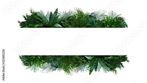 Green leaves nature frame layout of tropical plants bush (Monstera, palm, fern, rubber plant, pine, birds nest fern) foliage floral arrangement on white background with clipping path.