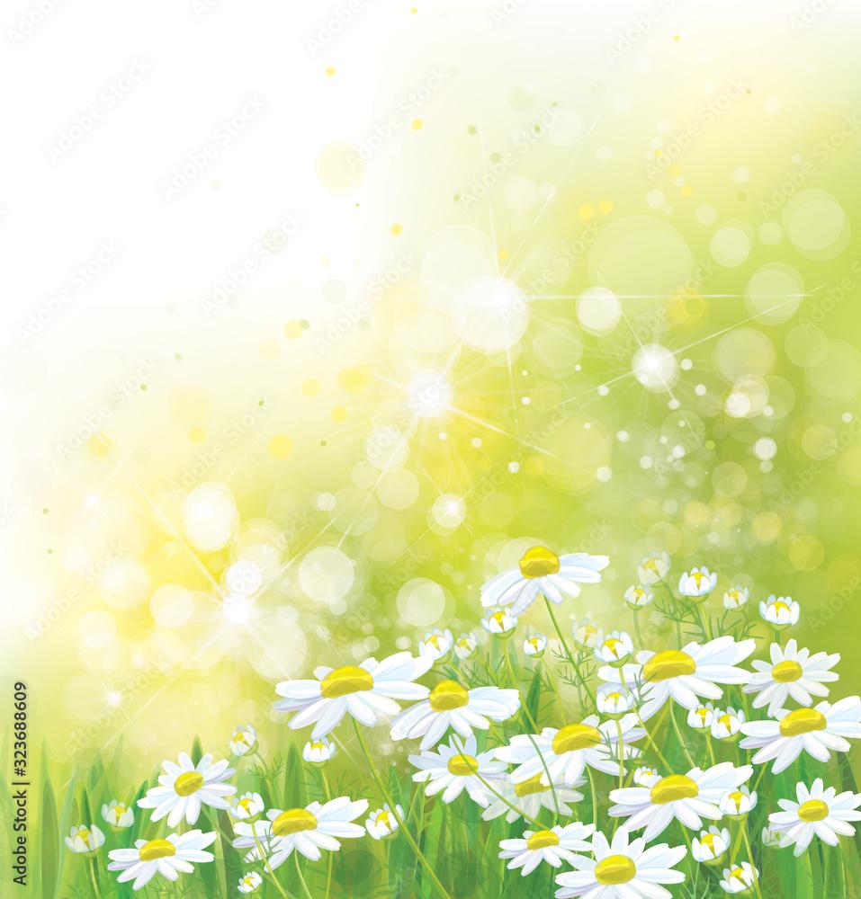 Fototapeta Vector summer,  nature background. Daisy flowers in sunshine.