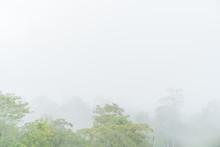 Good Morning Mist Background S...